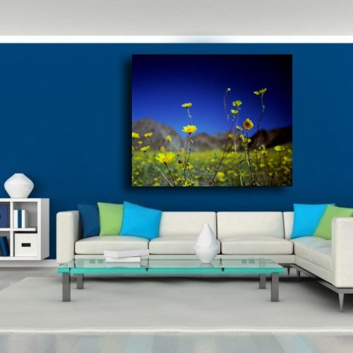 A stunning museum quality canvas gallery wrap. flowers, blue, yellow, death Valley, California, Desert, Home decor, photography, photo print