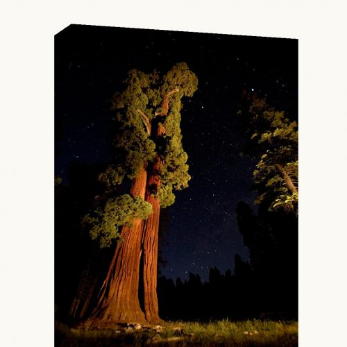 A stunning photo museum quality canvas gallery wrap of an original photograph I took in Sequoia National Park at night.
